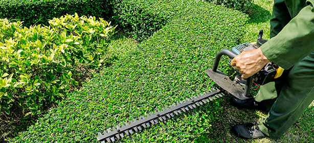 Garden Maintenance & Hedging